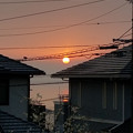 朝陽 梅 雀のカップル 20180216