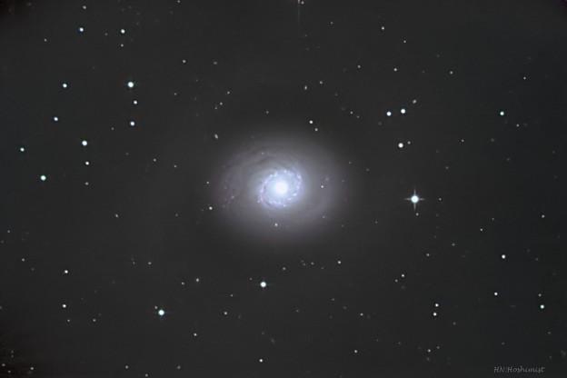 M94ひなぎく銀河20180310