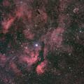 写真: はくちょう座のIC1318 サドル周辺