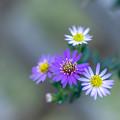 写真: こぼれ花