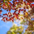 Photos: 秋をさがして