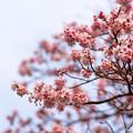 Photos: 春色のプロローグ