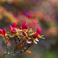 彩る芽吹き