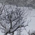 写真: 2月12日「追加された雪」