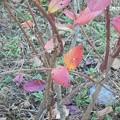 Photos: 11-17berry-d