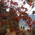 Photos: 11月20日「我が家の紅葉」