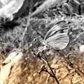Photos: 蝶つが否