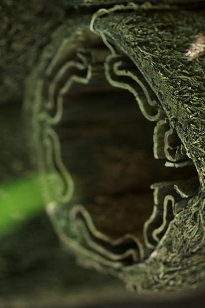 なんかの木