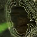Photos: なんかの木