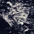 Photos: 黒白