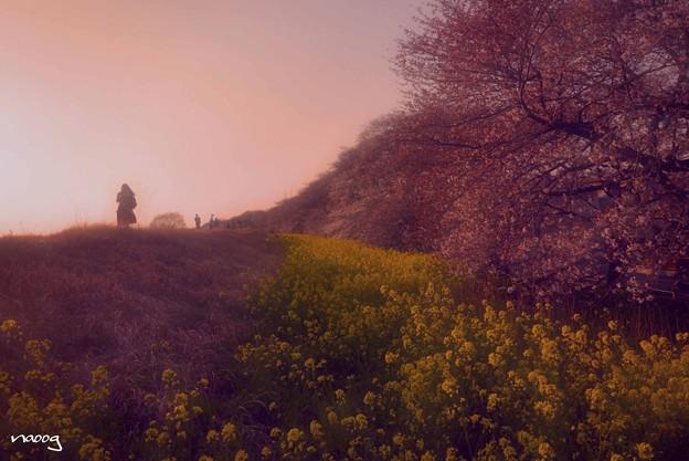 写真: 桜風の微笑み