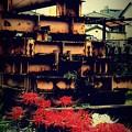 写真: Dead Endに咲く花