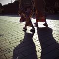 Photos: 冬椿
