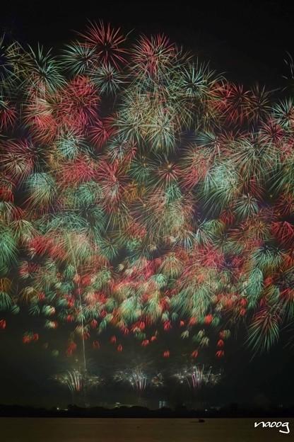 夜空の花束