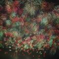 Photos: 夜空の花束