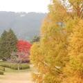 Photos: 緑、赤、黄