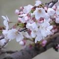 Photos: 咲きました !!
