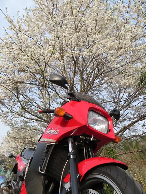 桜の開花と共に、ツーリングが気持ち良い♪