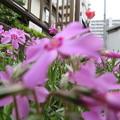 花の引継ぎ