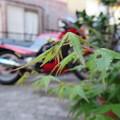Photos: お帰り~