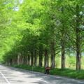 写真: 新緑の中の記念撮影