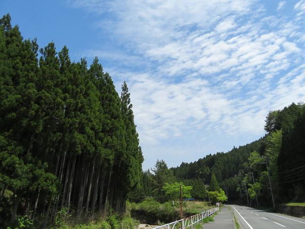 山間の新緑の休憩