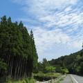 写真: 山間の新緑の休憩