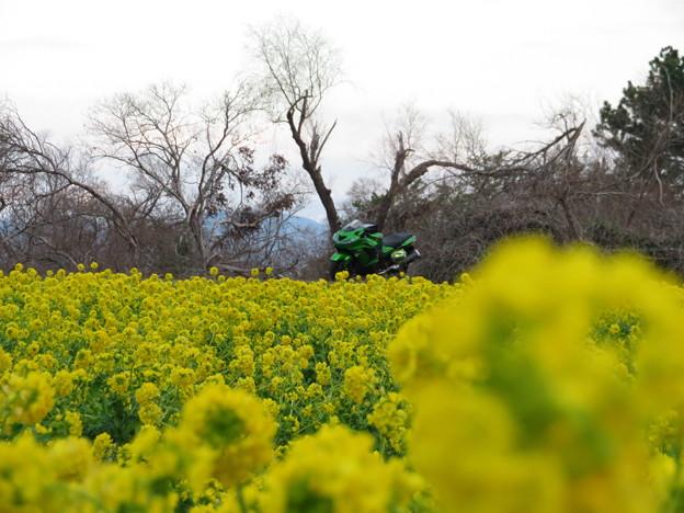 黄色とグリーン