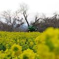 Photos: 黄色とグリーン