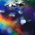 写真: Colorful