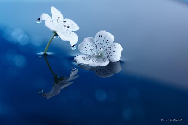 Photos: 白い天使 ♪
