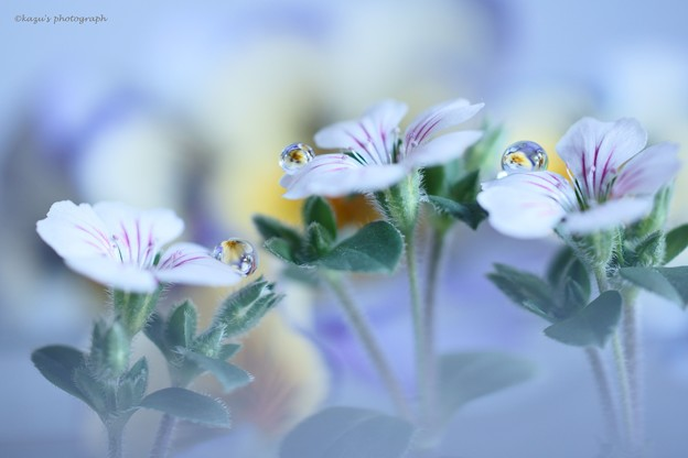 写真: 春のガーデン