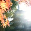 写真: 朝の光 ♪
