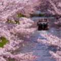 Photos: 京都伏見~十石船♪