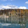 Photos: 青い池1