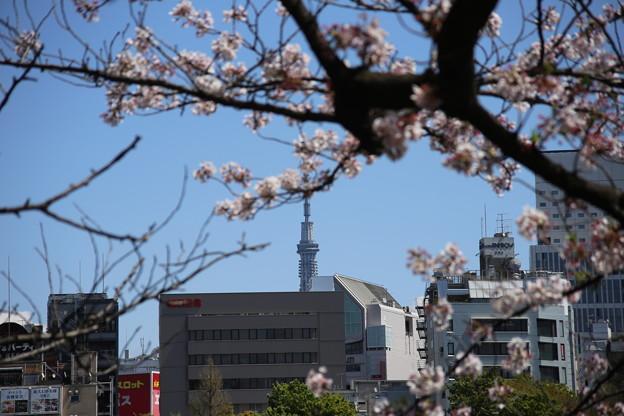 IMG_3860 北斎風桜とスカイツリー?