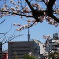 Photos: IMG_3860 北斎風桜とスカイツリー?
