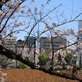 Photos: IMG_3866   北斎風桜とスカイツリー?第二弾