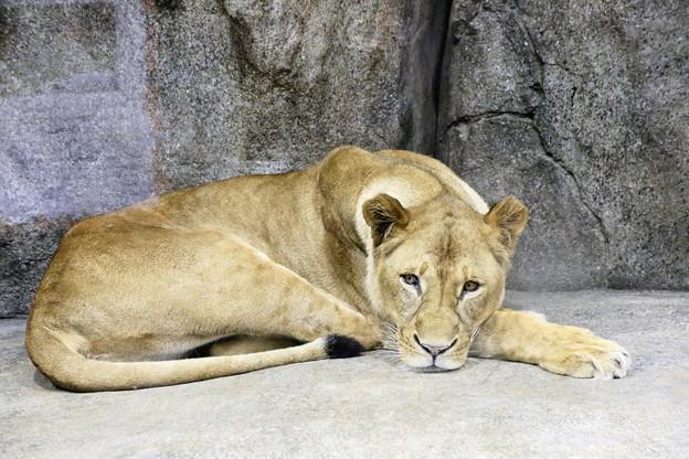 IMG_7876      ライオン母ちゃん