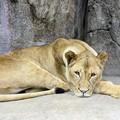 Photos: IMG_7876      ライオン母ちゃん