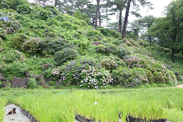 IMG_0011 小田原城東堀