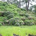 Photos: IMG_0011 小田原城東堀