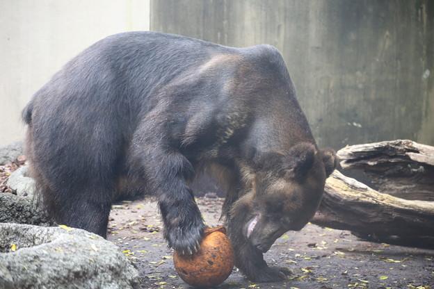 IMG_0155      フォワード熊選手
