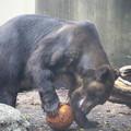 Photos: IMG_0155      フォワード熊選手