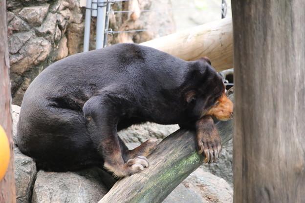 IMG_0118     考える熊