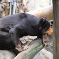 Photos: IMG_0118     考える熊