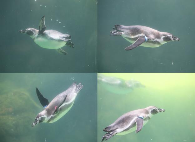 IMG_4240   ペンギン遊覧飛行