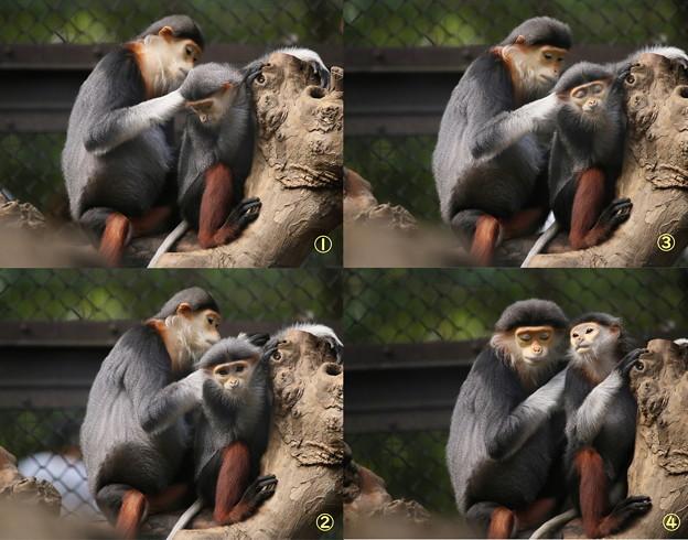 Photos: IMG_5207  モンチッチのような猿親子