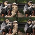 IMG_5207  モンチッチのような猿親子