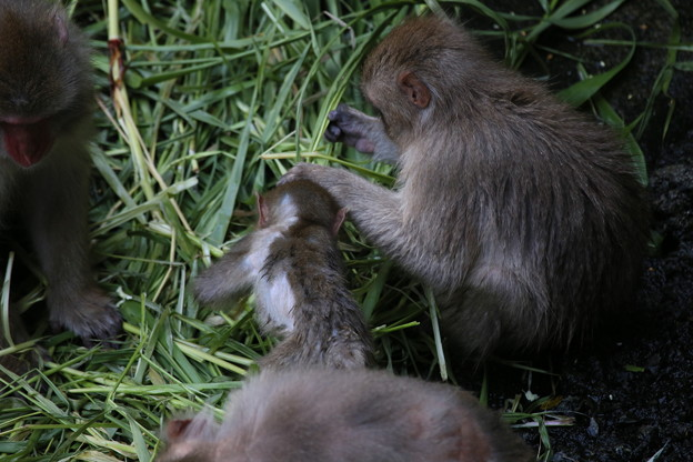 Photos: IMG_6004 サル社会に見るある縮図-2